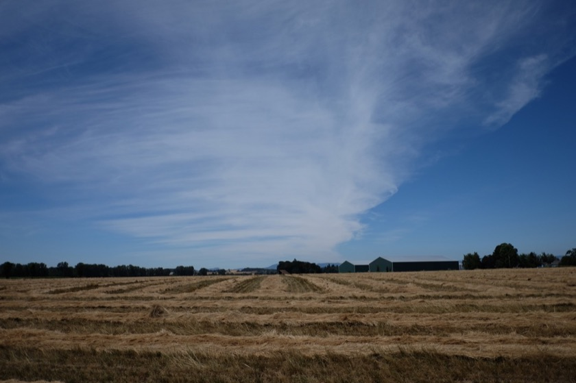 Fields in the process of being harvested, a common sight in the Willamette Valley.