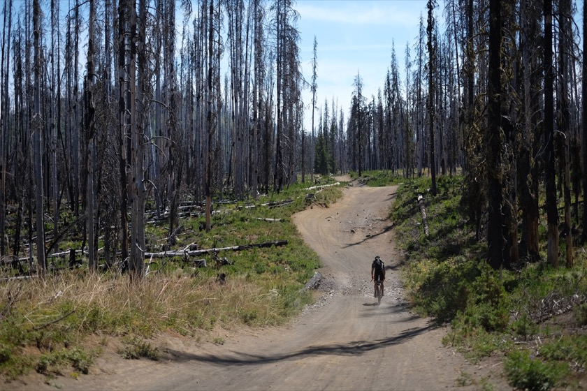 East of Big Lake our riding took us through land that burned in the B & B Complex Fire of 2003.