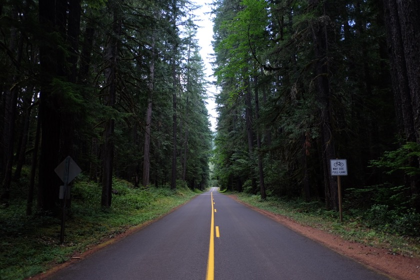 "The Old McKenzie Highway. Easily the most beautiful road I've ever ridden. The sign says ""Bicycles May Use Full Lane."""